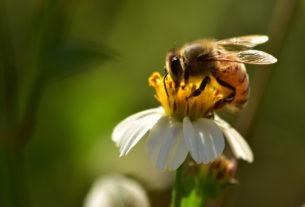 Salviamo api e agricoltori! L'iniziativa dei cittadini europei