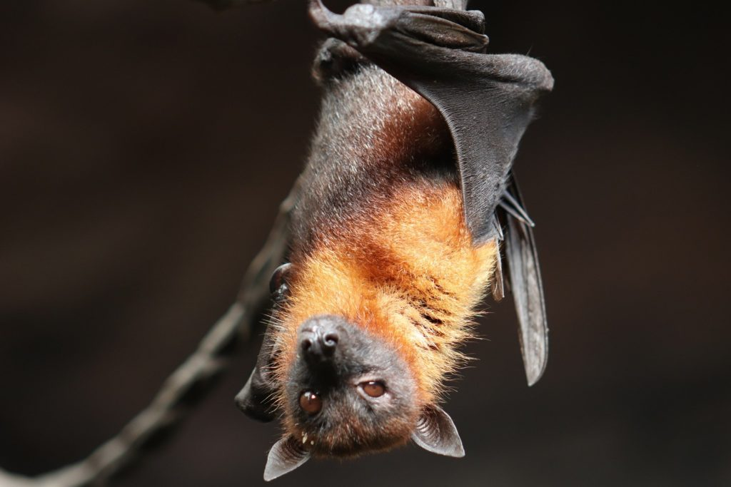 bat 4887509 1920