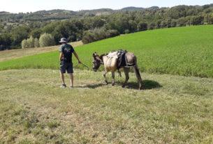 Gli Amici dell'Asino: il trekking con gli asini sulla Via di Francesco