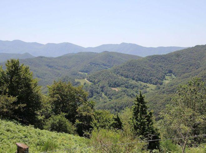 #IORESTOACASA con il Parco delle Foreste Casentinesi
