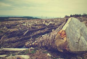 """Giornata della Terra: """"Chiediamo stop a deforestazioni e sostegno all'agroecologia"""""""
