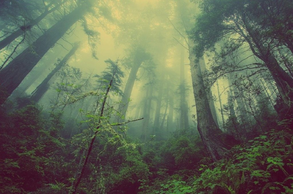 taglio boschi 1