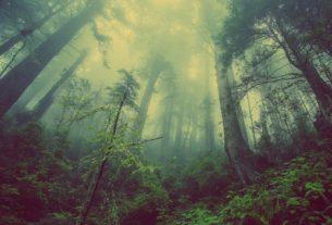 Il bosco non ha bisogno dell'uomo, è l'uomo che ha bisogno del bosco