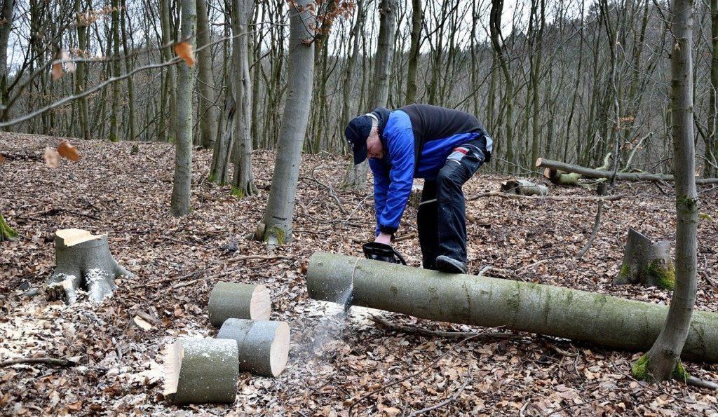 taglio boschi 2