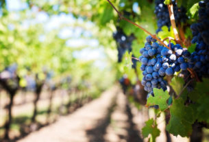 Salviamo il patrimonio vinicolo, poesia delle nostre terre