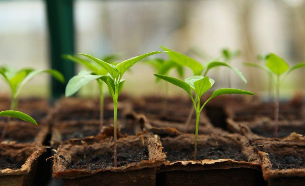 seedling 5009286 1280