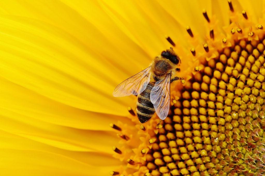 sunflower 1643794 1280