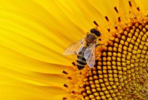 """""""Senza api siamo spacciati"""". Dieci azioni per salvarle"""