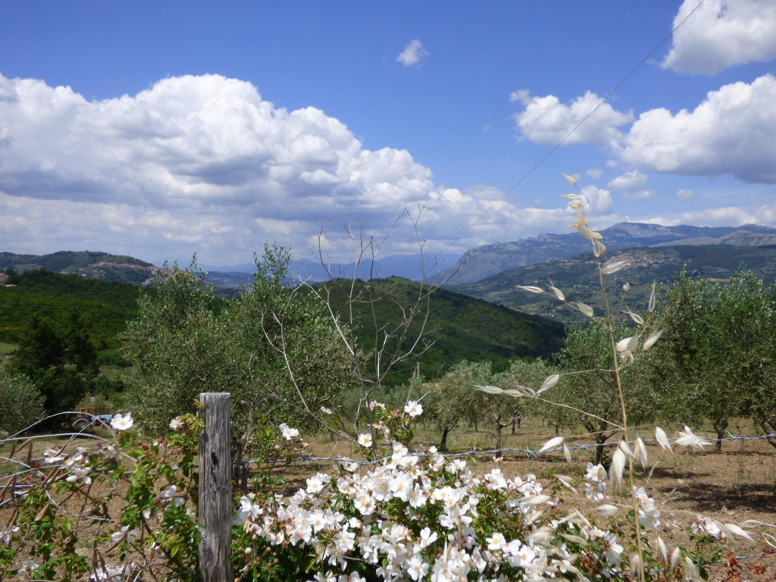 Cerco persone per creare una comunità intenzionale di prossimità in Campania
