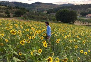 In Calabria una festa dei girasoli per ripartire dalla bellezza