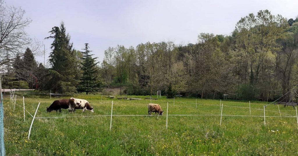 campi e bestiame
