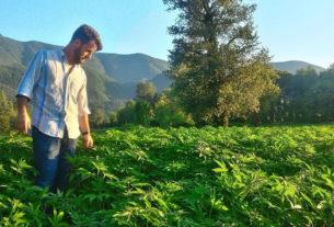 """""""Cambio vita e coltivo canapa industriale"""": Francesco Procacci e il suo ritorno alla terra"""