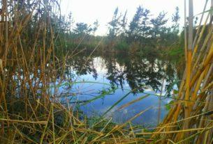 Offro esperienze in orto naturale ad Alghero con possibilità di accampamento