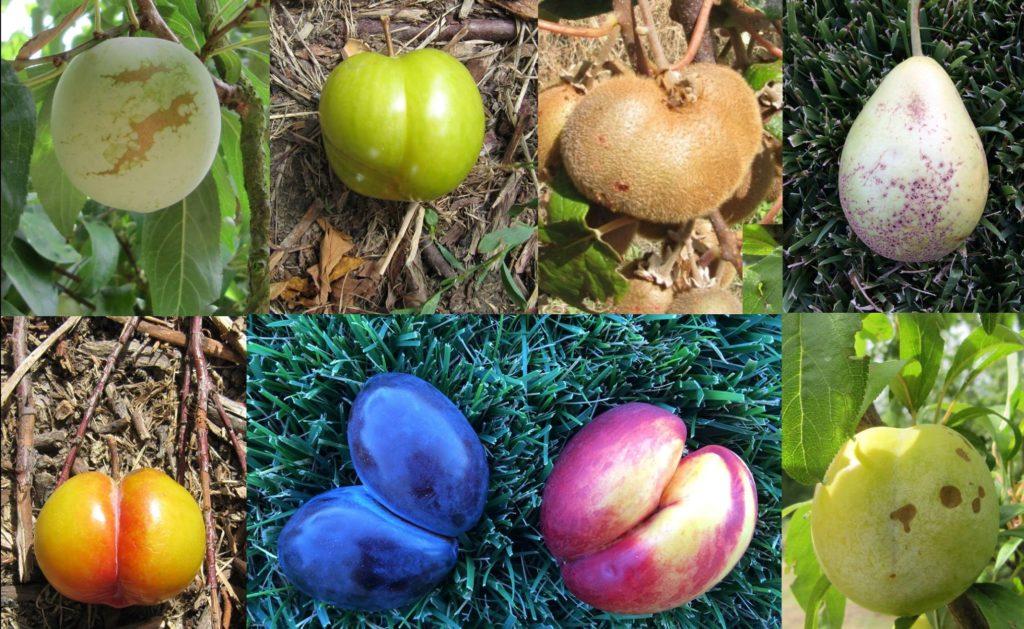frutta bella dentro