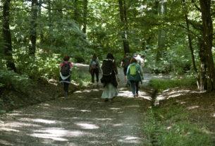 Forest Therapy: il bagno nella foresta che rigenera corpo, mente e spirito