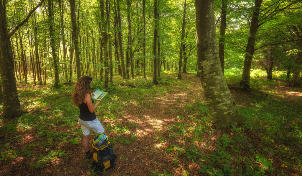 parco foreste casentinesi cervo volante