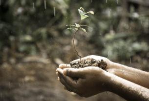 Il potere curativo delle piante maestre