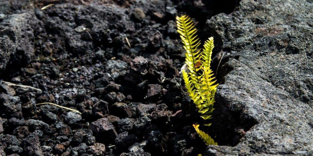 resilienza: una pianta che cresce in mezzo alle rocce