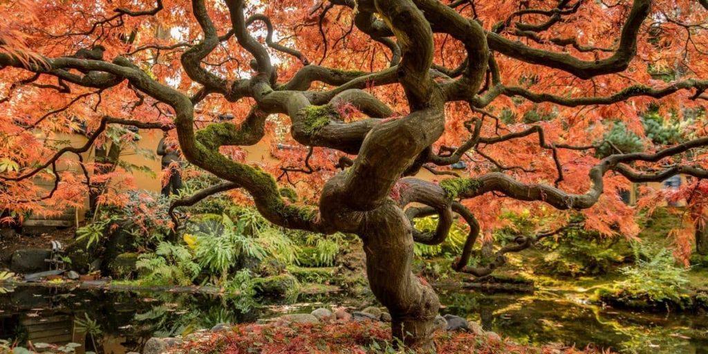 sostenibilita ambientale albero secolare
