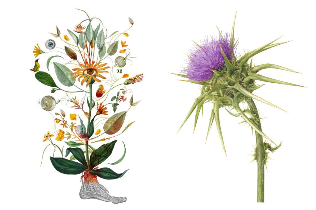Herbarium Vagans1