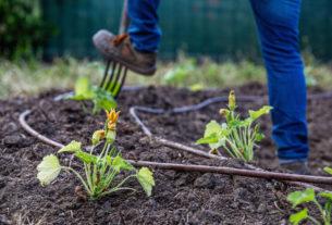 La Scuola della Terra, un percorso consapevole verso l'agroecologia