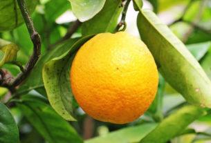 Perché la vitamina C è un nutriente essenziale per la vita