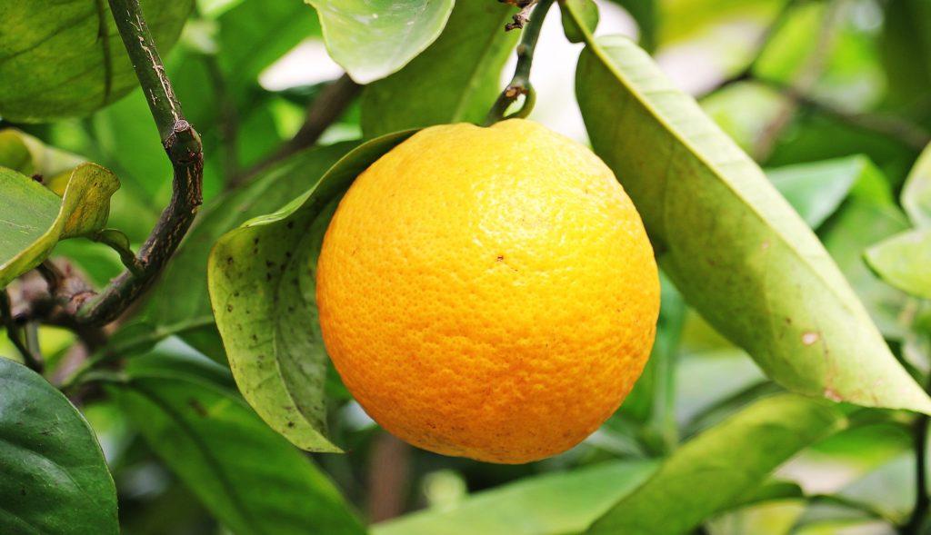 agrumi vitaminac