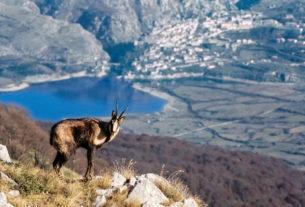 """""""I parchi naturali possono salvarci dalla crisi ecologica ed economica"""""""