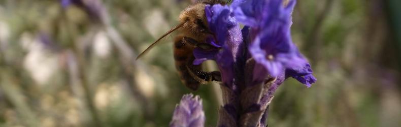 Flemfarm – Apicultura Naturale