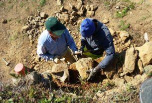 Muretti a secco per combattere il rischio idrogeologico alle Cinqueterre