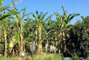 Giardino delle Biodiversità