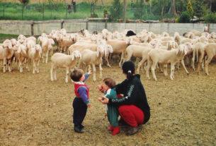 Il Pozzo: la fattoria didattica che avvicina i bambini al mondo agricolo