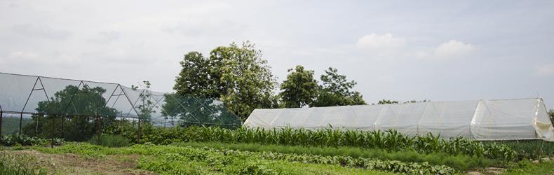 Agriturismo La Bessa