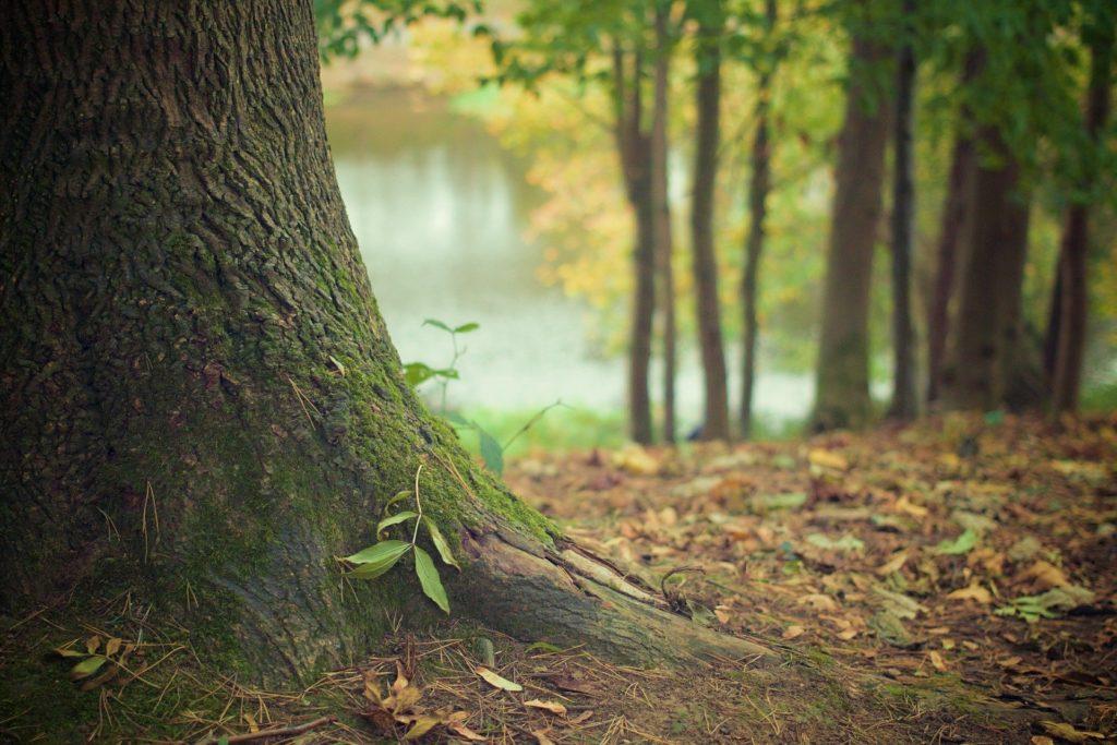 alberi radici