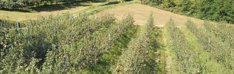 Azienda agricola Bargiolina