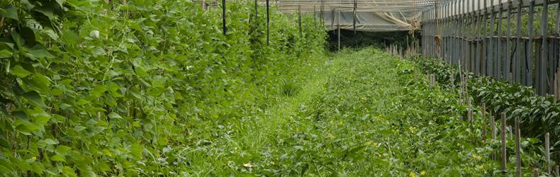 Azienda agricola Manenti