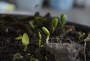 Cerco terreno agricolo o boschivo per progetto di permacultura