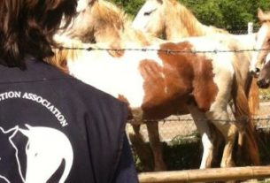 IHP – Italian Horse Protection