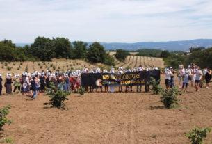 Nocciola Italia: contadini e cittadini contro l'avanzata delle monoculture