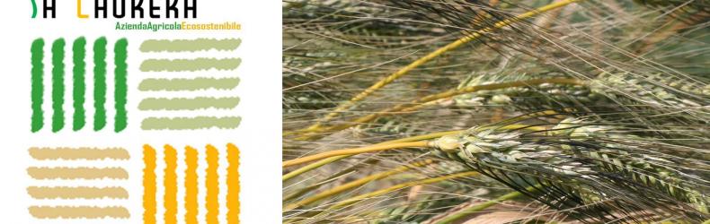 Sa Laurera – Azienda Agricola Ecosostenibile