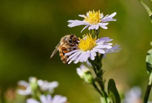 Diamo una casa alle api: il progetto che aiuta impollinatori e biodiversità