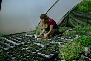La Bargazzina, l'azienda dei contadini scienziati che promuovono la cultura delle piante – Piccoli produttori #5