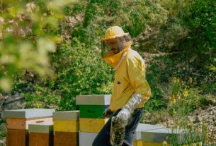 Dalle aule di ingegneria alla vita nella natura: l'apicoltore Luca Bianchi – Piccoli produttori #3