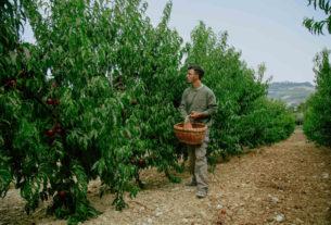Maivo, una rete virtuosa per valorizzare l'agricoltura pro-natura – Piccoli produttori #6