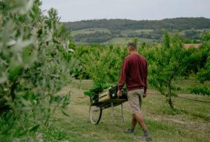 """""""Osservare l'ecosistema e tutelarlo"""": l'agricoltura organica rigenerativa – Piccoli produttori #4"""