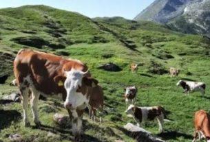 Coppia cerca lavoro a stretto contatto con la natura