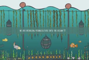 Funghi mangia-sigarette e alghe che assorbono Co2, così Montemero ripulisce il Mediterraneo
