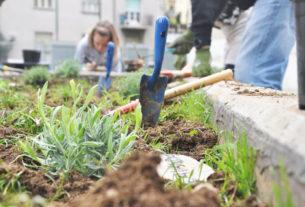 Il Boschetto: da spazio abbandonato a orto dove si coltivano insieme frutta, verdura e tempo!