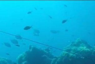 Associazione Cinque Terre sotto il mare