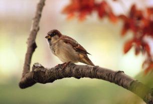 Caccia: milioni di uccelli morti ogni anno per avvelenamento da piombo